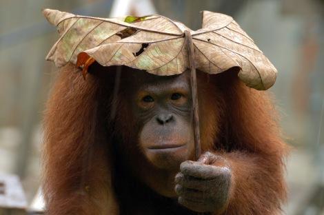 ff3be-orangotango